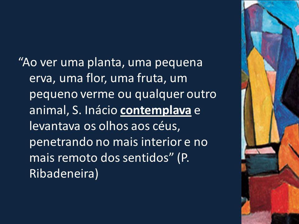 Ao ver uma planta, uma pequena erva, uma flor, uma fruta, um pequeno verme ou qualquer outro animal, S.