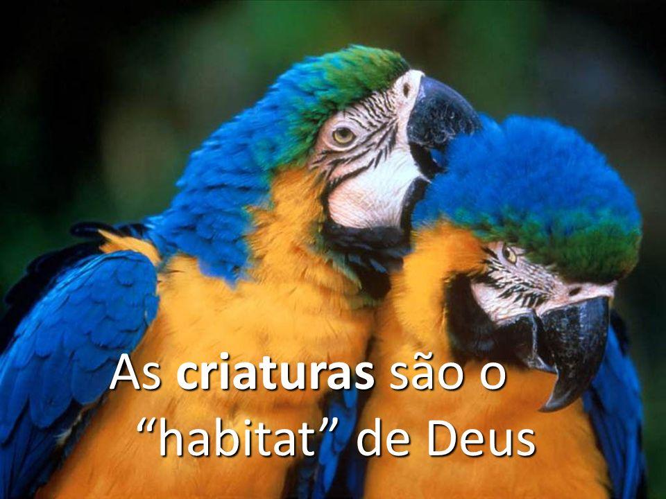 As criaturas são o habitat de Deus