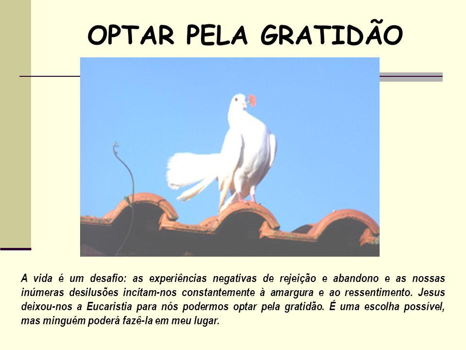 OPTAR PELA GRATIDÃO