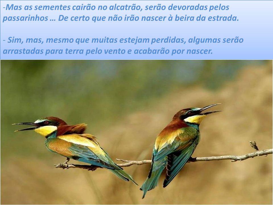Mas as sementes cairão no alcatrão, serão devoradas pelos passarinhos … De certo que não irão nascer à beira da estrada.