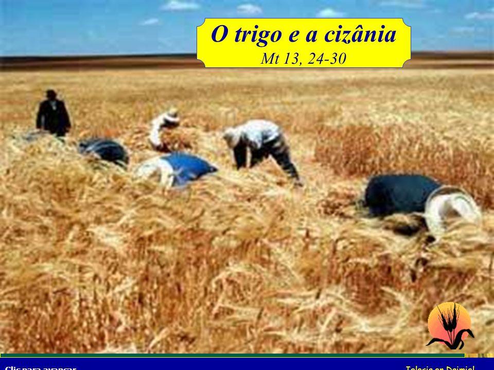 O trigo e a cizânia Mt 13, 24-30.
