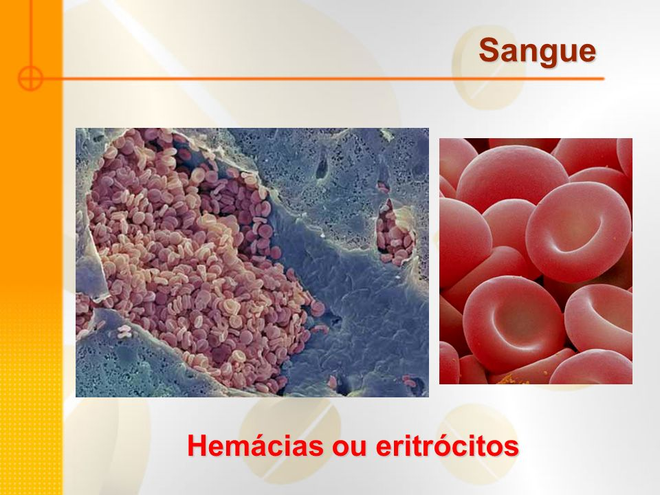 Hemácias ou eritrócitos
