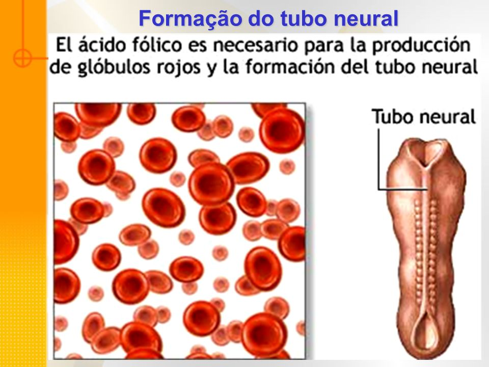Formação do tubo neural
