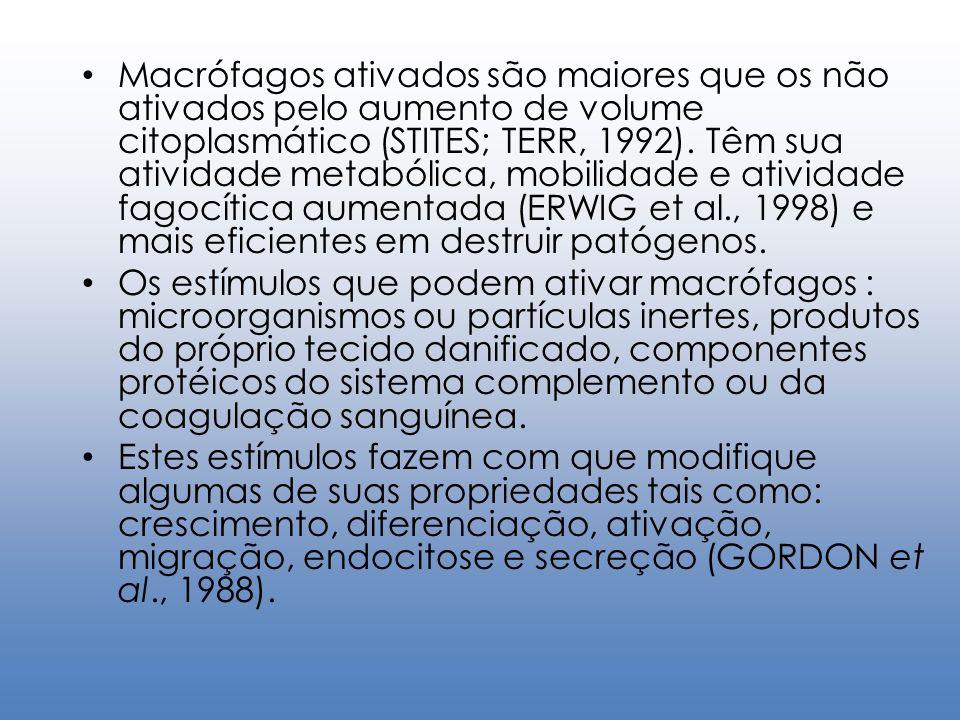 Macrófagos ativados são maiores que os não ativados pelo aumento de volume citoplasmático (STITES; TERR, 1992). Têm sua atividade metabólica, mobilidade e atividade fagocítica aumentada (ERWIG et al., 1998) e mais eficientes em destruir patógenos.