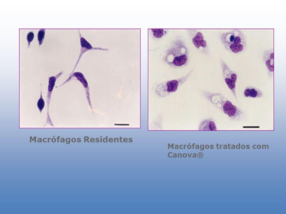 Macrófagos Residentes