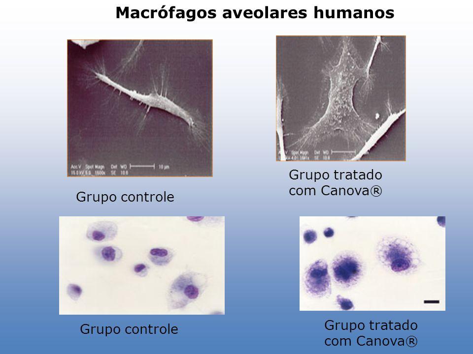 Macrófagos aveolares humanos