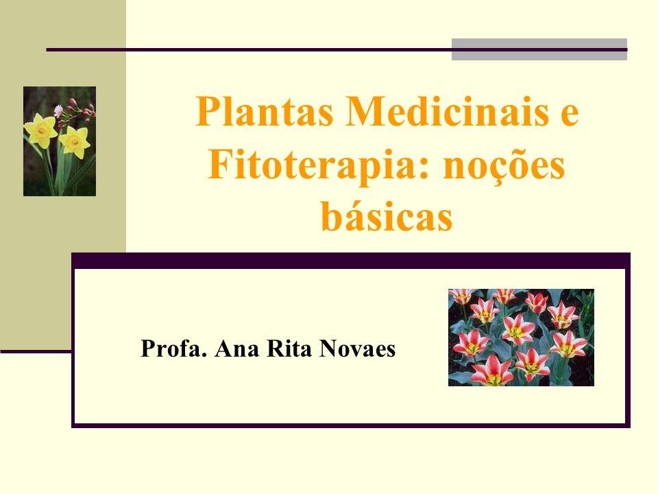 Plantas Medicinais e Fitoterapia: noções básicas