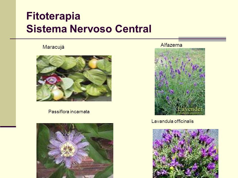 Fitoterapia Sistema Nervoso Central