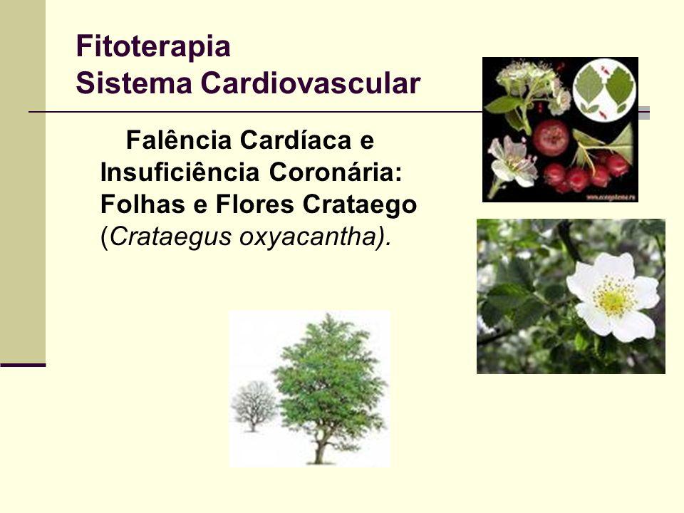 Fitoterapia Sistema Cardiovascular