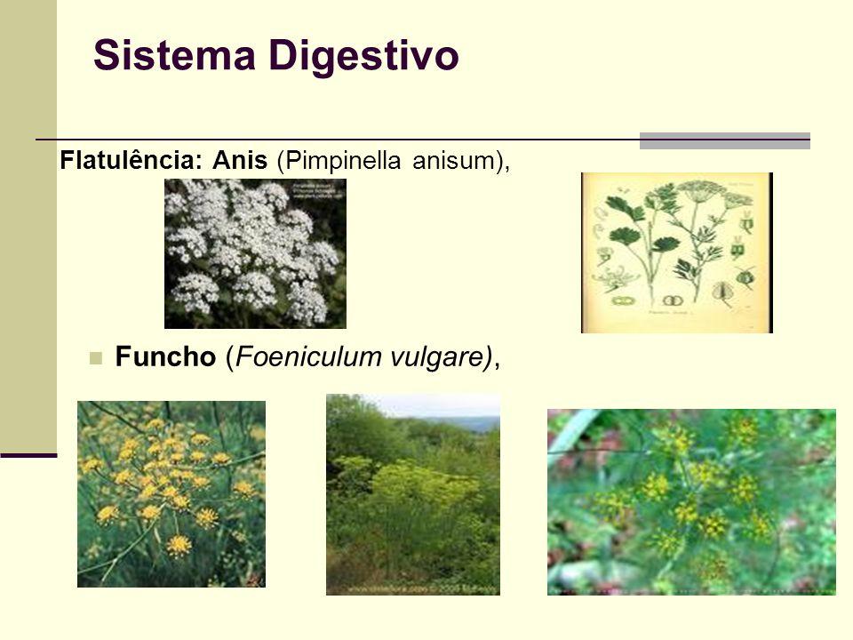 Sistema Digestivo Funcho (Foeniculum vulgare),