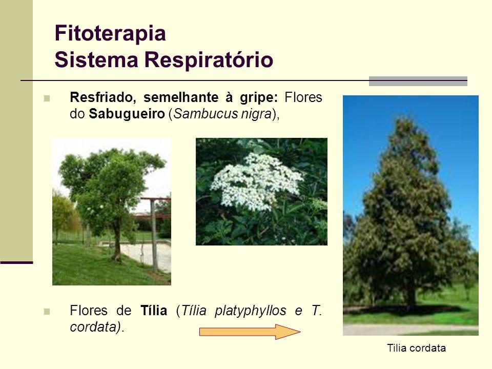 Fitoterapia Sistema Respiratório