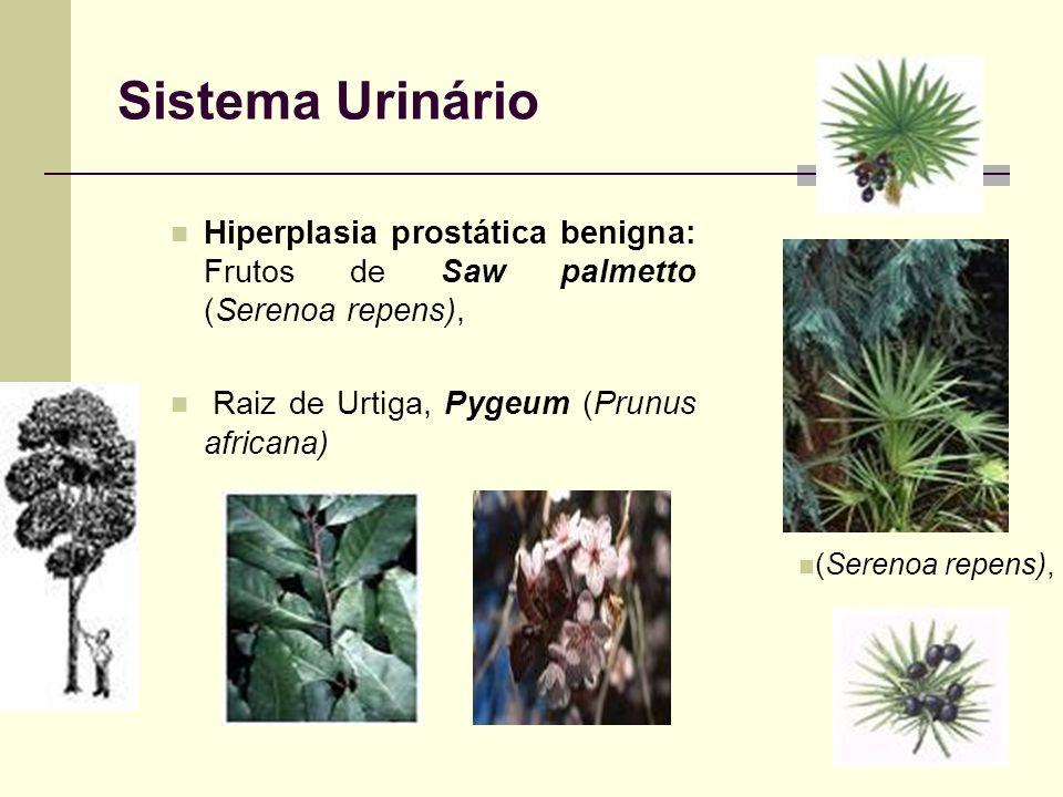 Sistema UrinárioHiperplasia prostática benigna: Frutos de Saw palmetto (Serenoa repens), Raiz de Urtiga, Pygeum (Prunus africana)
