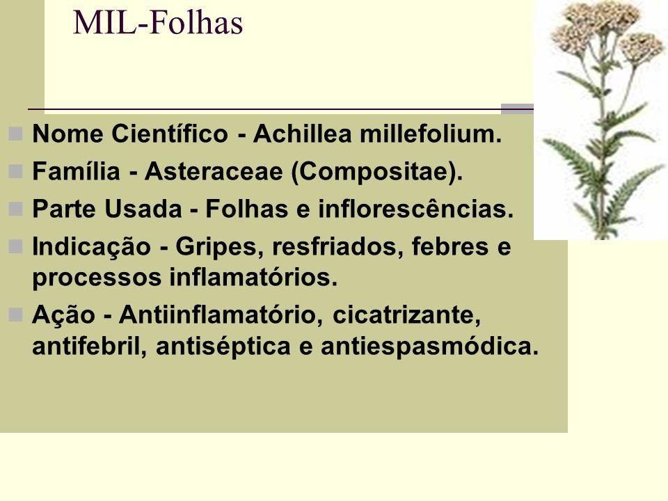 MIL-Folhas Nome Científico - Achillea millefolium.