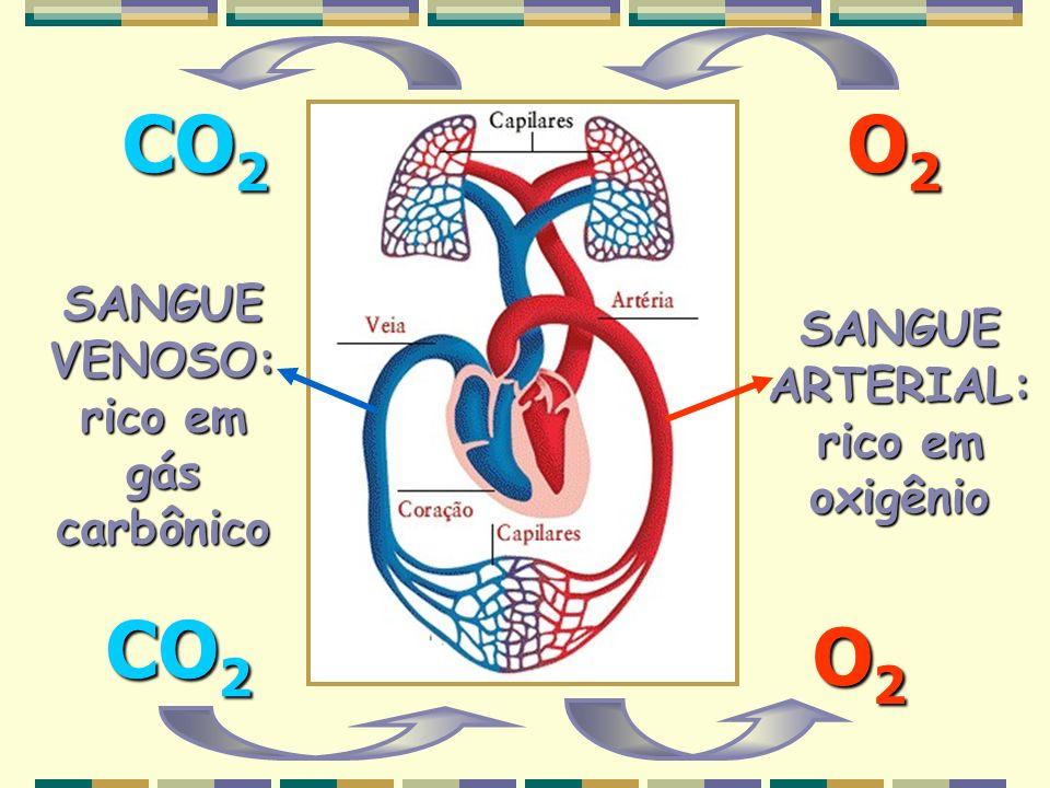 SANGUE VENOSO: rico em gás carbônico