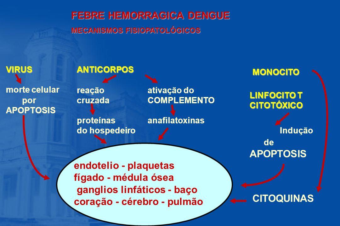 FEBRE HEMORRAGICA DENGUE