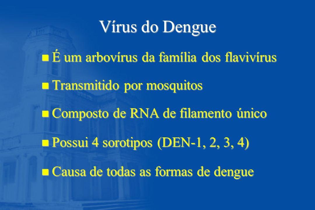 Vírus do Dengue É um arbovírus da família dos flavivírus
