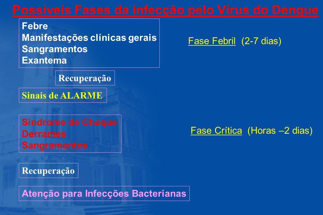Possíveis Fases da infecção pelo Vírus do Dengue