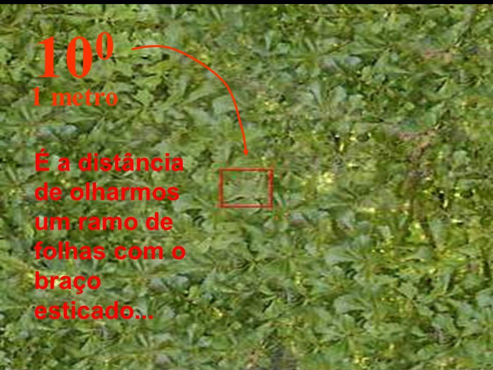 100 1 metro É a distância de olharmos um ramo de folhas com o braço esticado...
