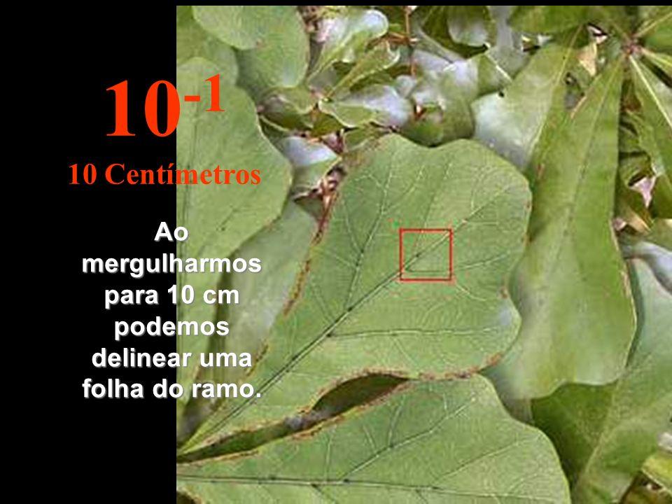 Ao mergulharmos para 10 cm podemos delinear uma folha do ramo.