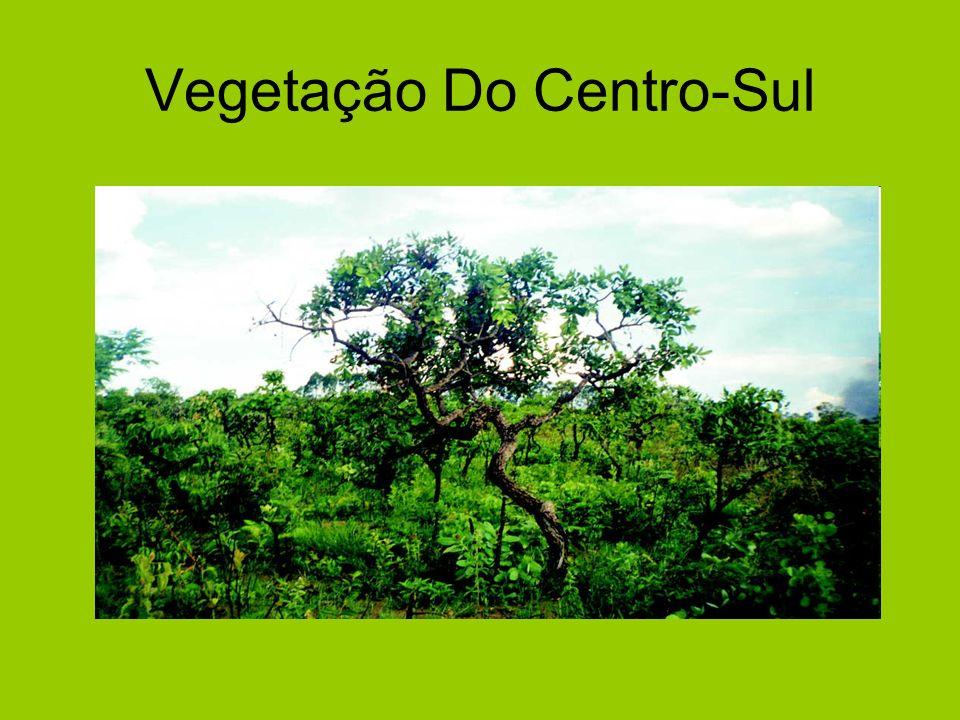 Vegetação Do Centro-Sul