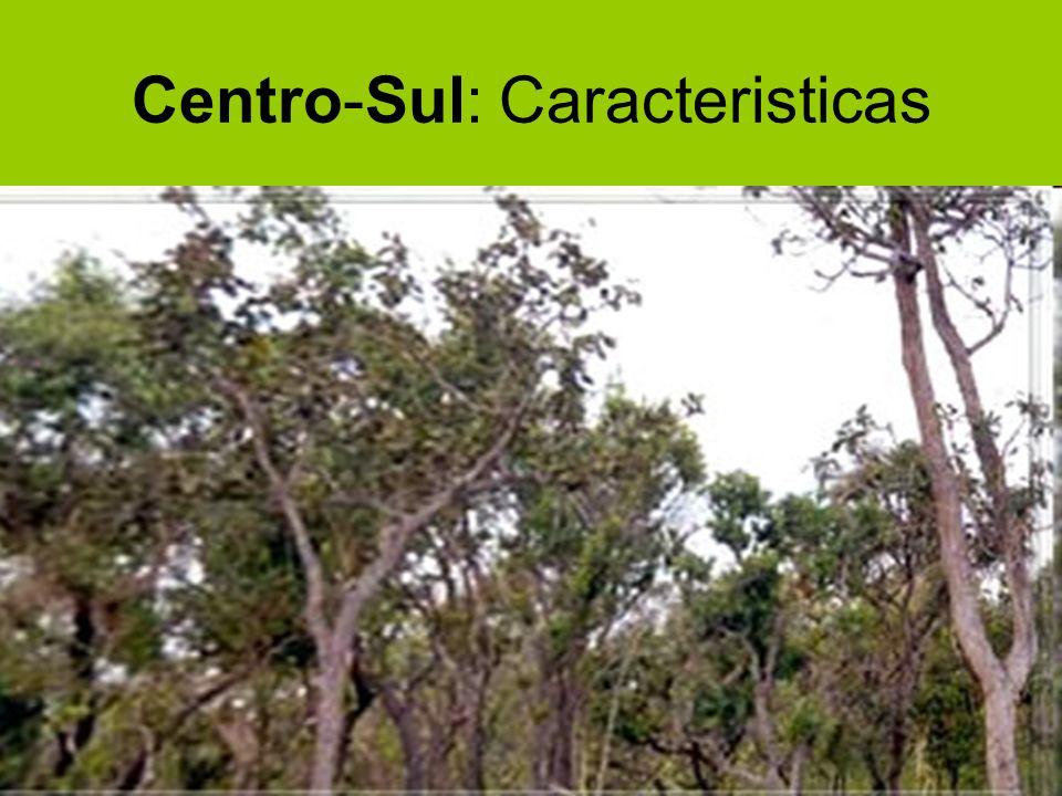 Centro-Sul: Caracteristicas