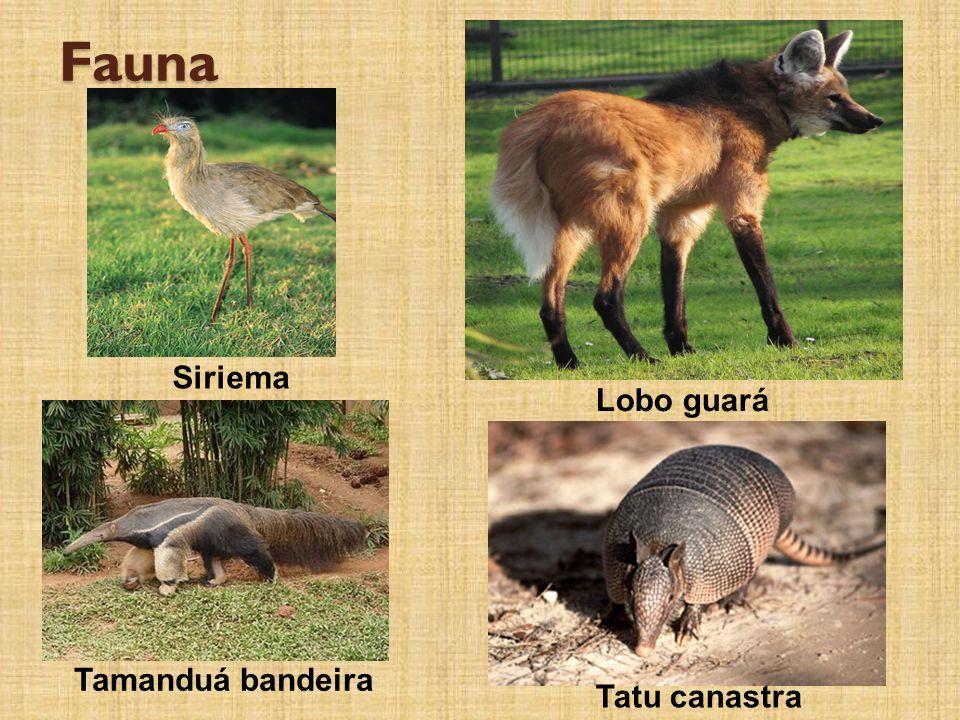 Fauna Siriema Lobo guará Tamanduá bandeira Tatu canastra