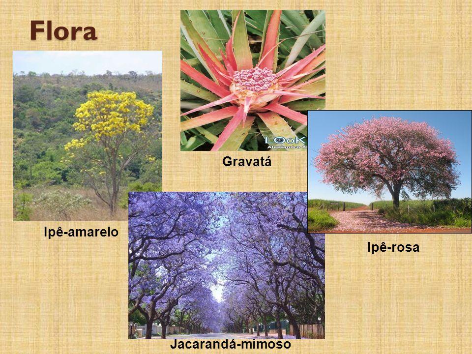 Flora Gravatá Ipê-amarelo Ipê-rosa Jacarandá-mimoso