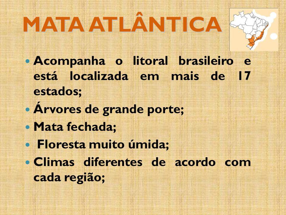 MATA ATLÂNTICA Acompanha o litoral brasileiro e está localizada em mais de 17 estados; Árvores de grande porte;