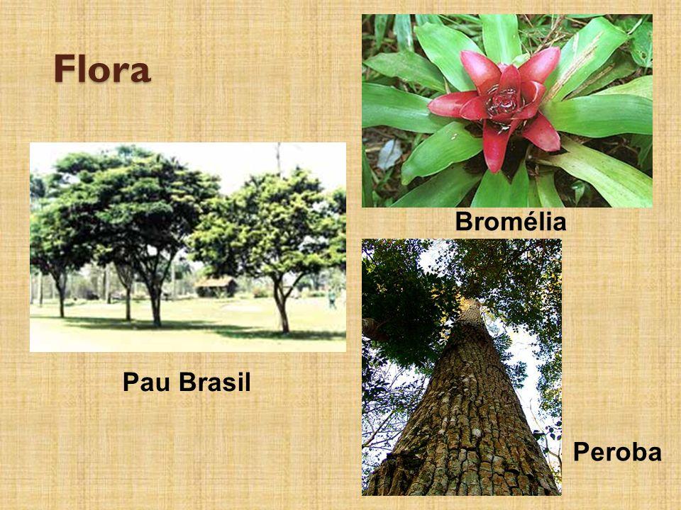 Flora Bromélia Pau Brasil Peroba