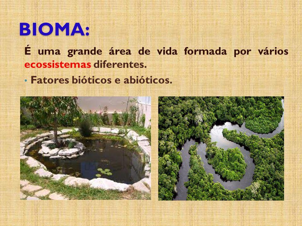 BIOMA: É uma grande área de vida formada por vários ecossistemas diferentes.