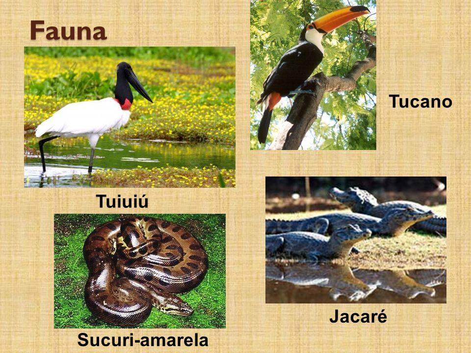 Fauna Tucano Tuiuiú Jacaré Sucuri-amarela