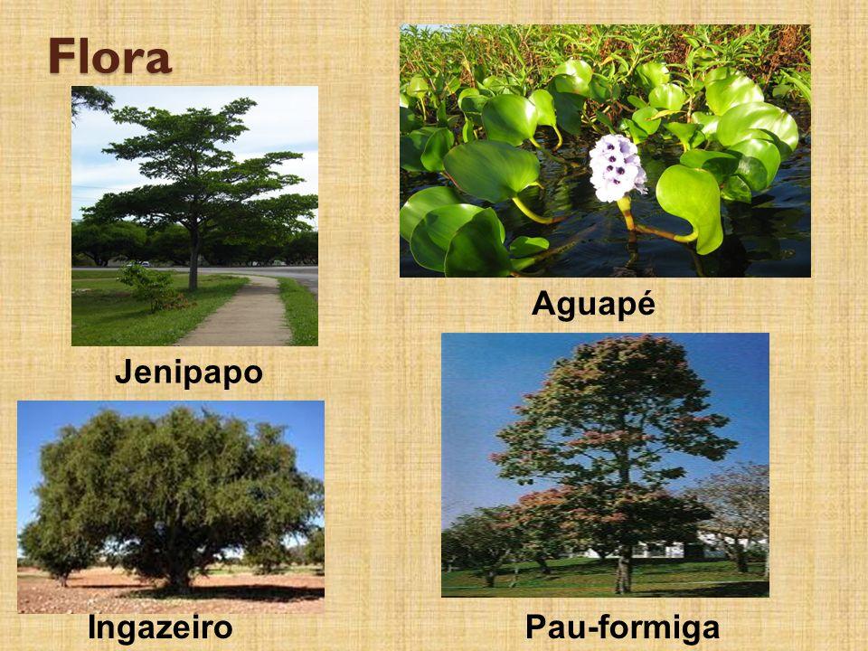 Flora Aguapé Jenipapo Ingazeiro Pau-formiga