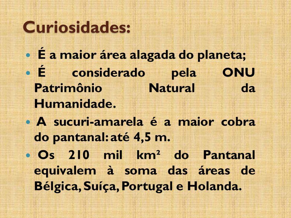Curiosidades: É a maior área alagada do planeta;