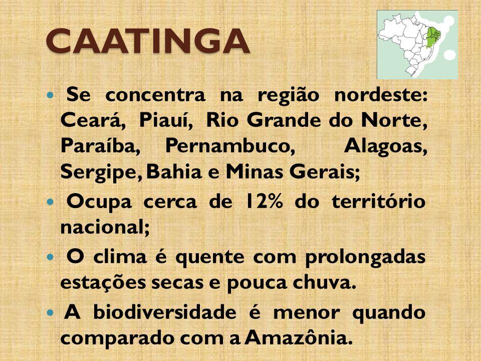 CAATINGA Se concentra na região nordeste: Ceará, Piauí, Rio Grande do Norte, Paraíba, Pernambuco, Alagoas, Sergipe, Bahia e Minas Gerais;