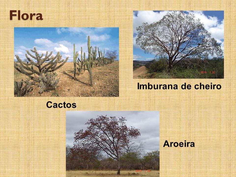 Flora Imburana de cheiro Cactos Aroeira