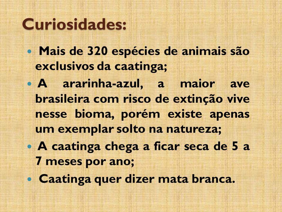 Curiosidades: Mais de 320 espécies de animais são exclusivos da caatinga;