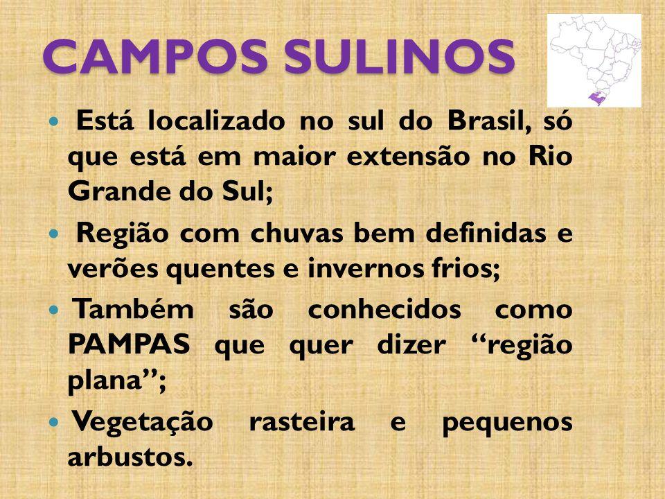 CAMPOS SULINOS Está localizado no sul do Brasil, só que está em maior extensão no Rio Grande do Sul;