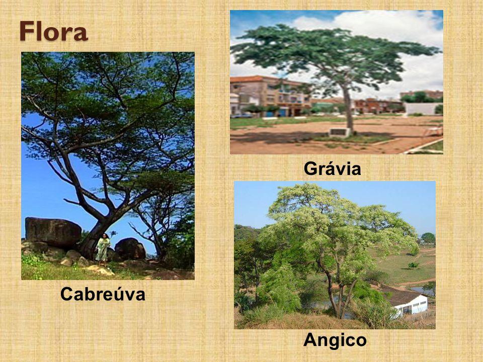 Flora Grávia Cabreúva Angico