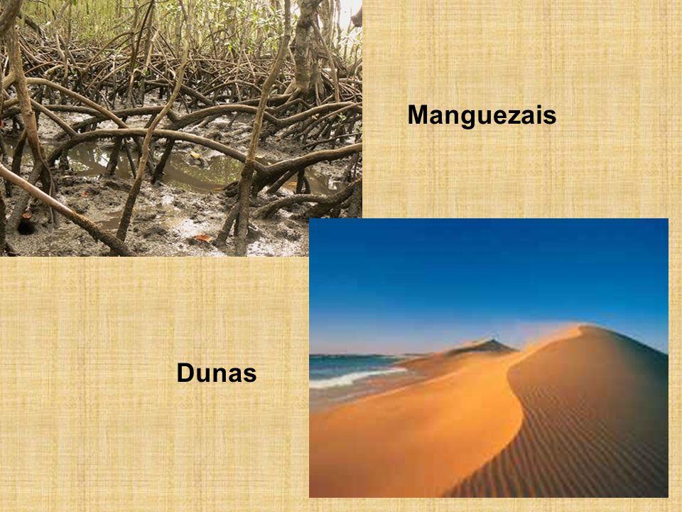 Manguezais Dunas
