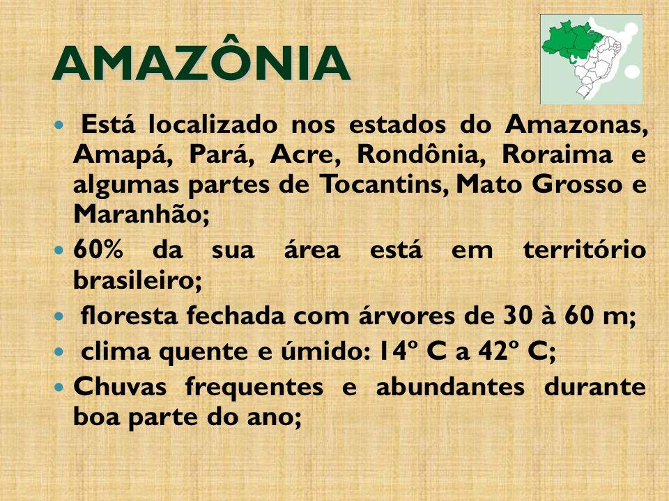 AMAZÔNIA Está localizado nos estados do Amazonas, Amapá, Pará, Acre, Rondônia, Roraima e algumas partes de Tocantins, Mato Grosso e Maranhão;