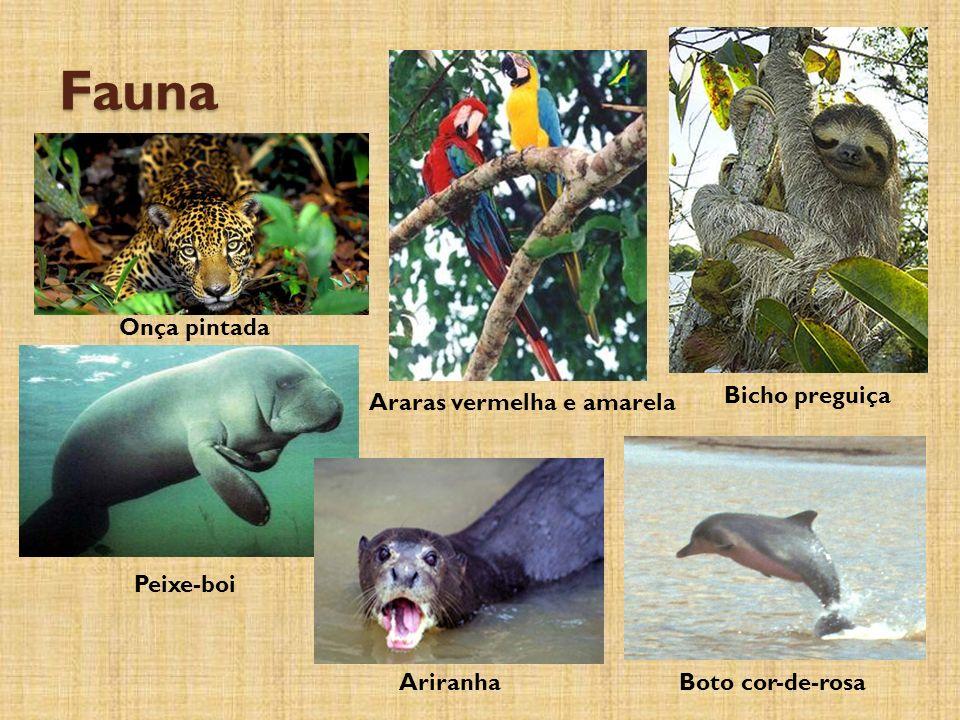 Fauna Onça pintada Bicho preguiça Araras vermelha e amarela Peixe-boi