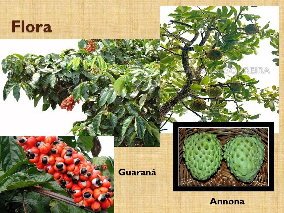 Flora Guaraná Annona