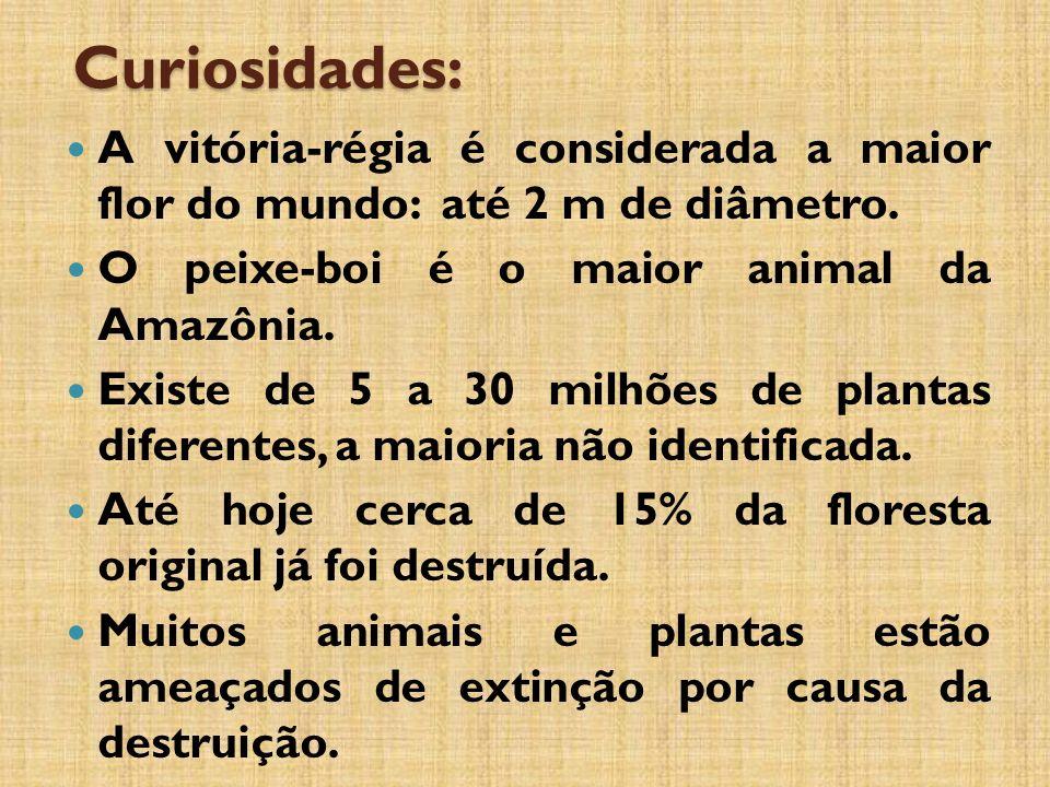 Curiosidades: A vitória-régia é considerada a maior flor do mundo: até 2 m de diâmetro. O peixe-boi é o maior animal da Amazônia.