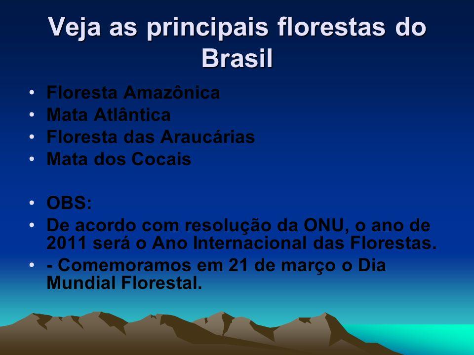 Veja as principais florestas do Brasil