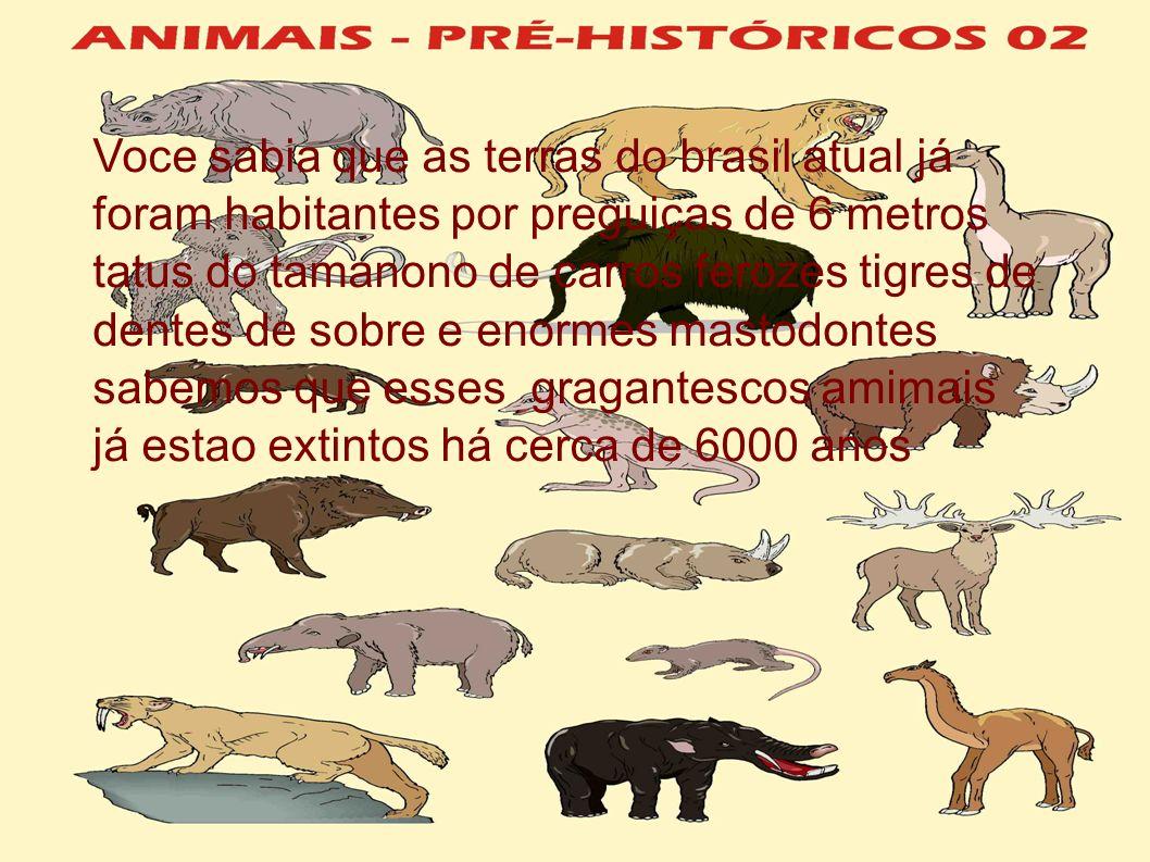 Voce sabia que as terras do brasil atual já foram habitantes por preguiças de 6 metros tatus do tamanono de carros ferozes tigres de dentes de sobre e enormes mastodontes sabemos que esses gragantescos amimais já estao extintos há cerca de 6000 anos