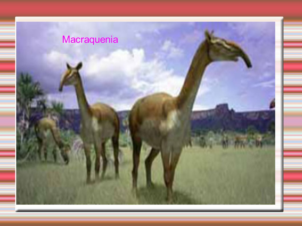 Macraquenia