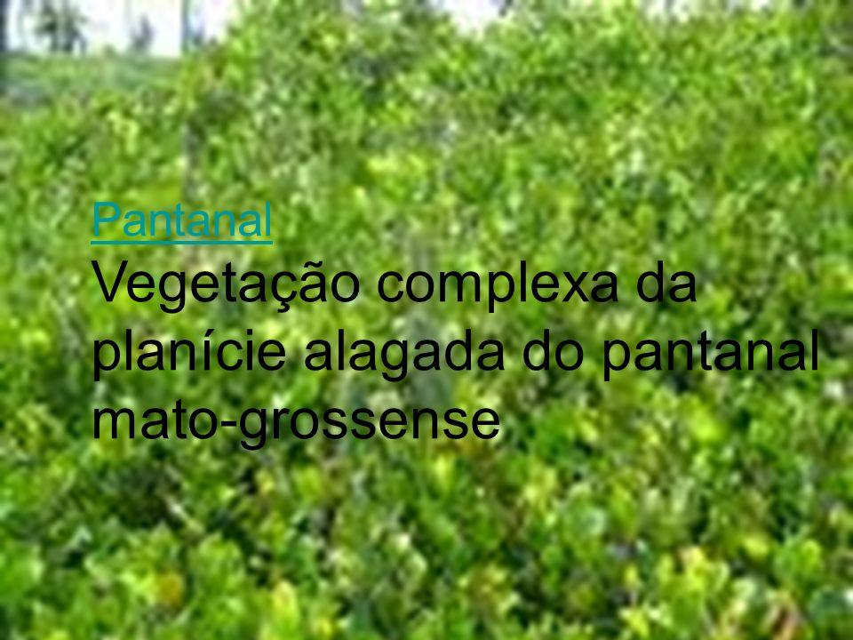 Pantanal Vegetação complexa da planície alagada do pantanal mato-grossense