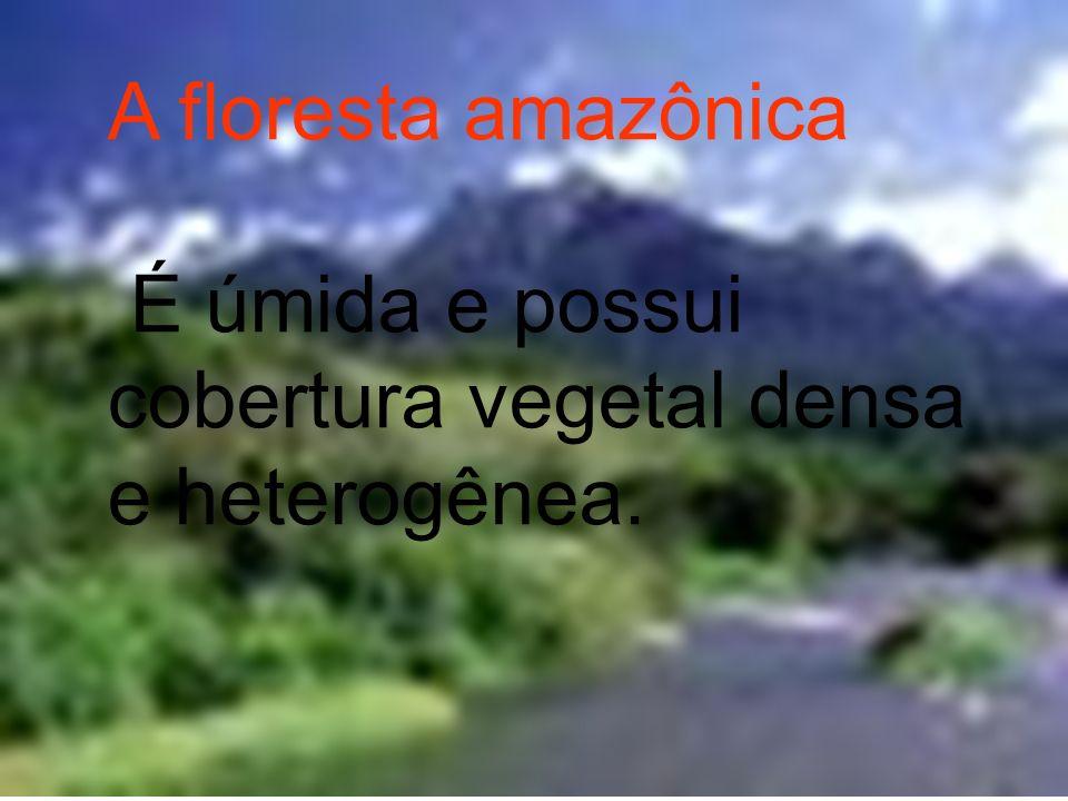 A floresta amazônica É úmida e possui cobertura vegetal densa e heterogênea.