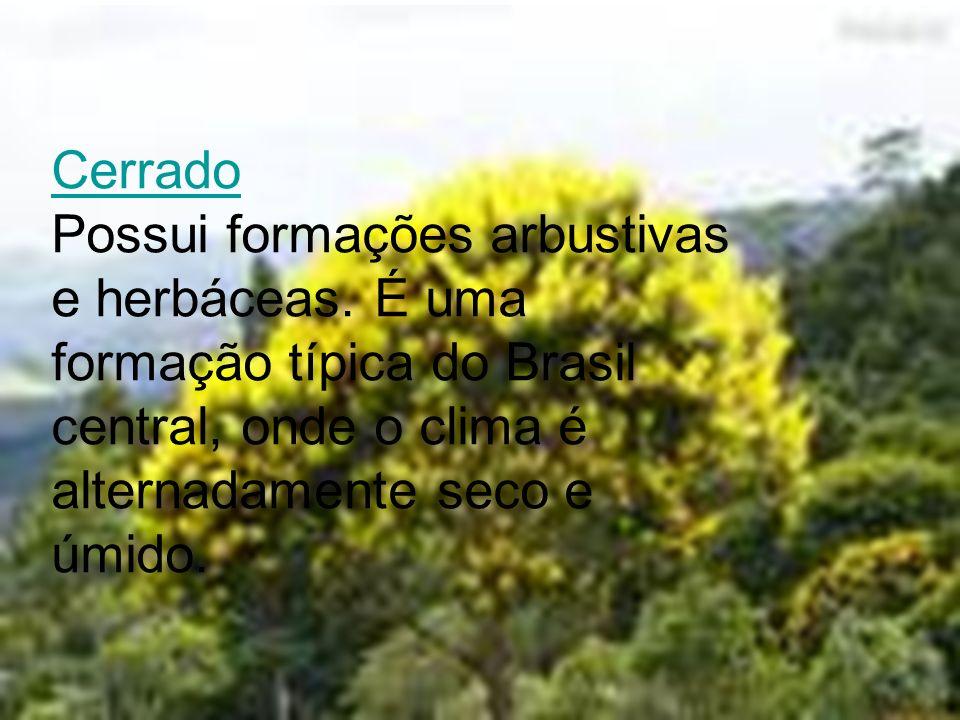 Cerrado Possui formações arbustivas e herbáceas