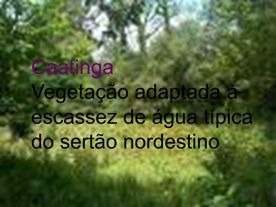 Caatinga Vegetação adaptada à escassez de água típica do sertão nordestino.